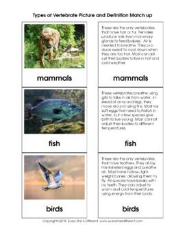 Montessori-inspired Intro to Biology Printable Pack Bundle