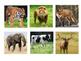 Montessori inspired realistic animal puzzles
