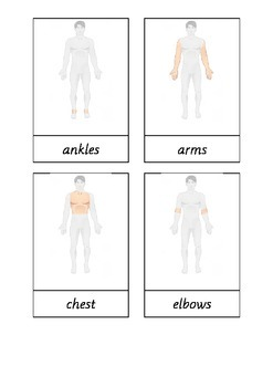 Montessori terminology cards for part of the human body