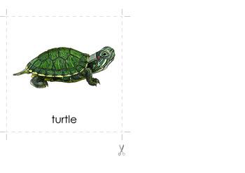 Montessori turtle card