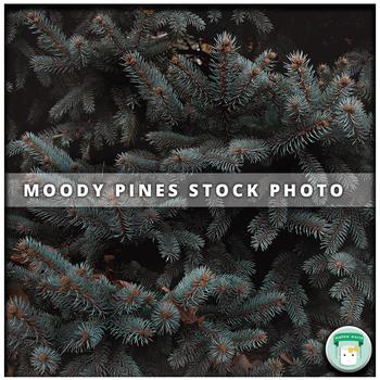 Nature Stock Photo Moody Pine Tree