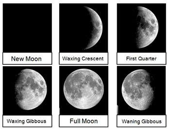 Moon Phases Card Sort Or Lab Station Activity 974368 on Science Worksheets For First Grade Free