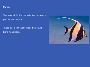 Moorish Idol - Fish - Power Point information facts pictures