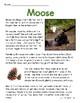 FREEBIE: Moose Close Reading Passage