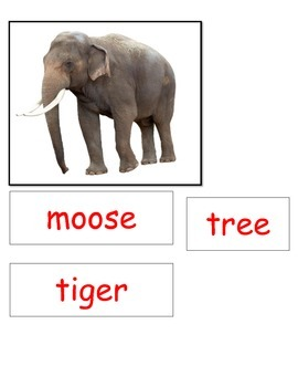 Loose Tooth Moose Zebra DENTAL HEALTH MONTH sequencing ESL real pictures