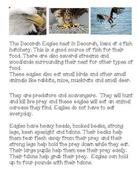 More Decorah Eagle Activities