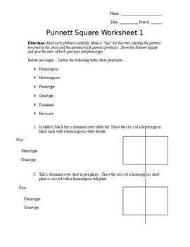 More Punnett Square Practice