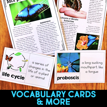 Morpho Butterfly: Informational Article, QR Code Research & Fact Sort