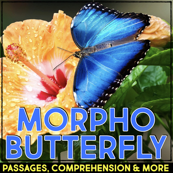 Morpho Butterfly: Informational Article, QR Code Research