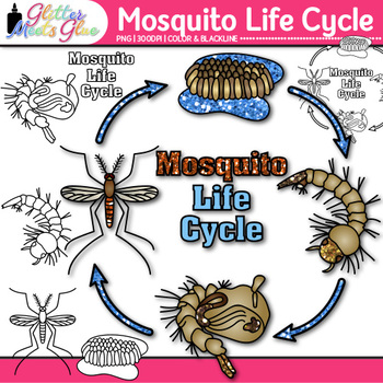 Mosquito Life Cycle Clip Art {Great for Animal Groups, Insect, & Bug Resources}