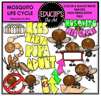 Mosquito Life Cycle Clip Art Bundle {Educlips Clipart}