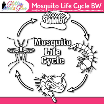 Mosquito Life Cycle Clip Art {Great for Animal Group, Insect, Bug Resources} B&W