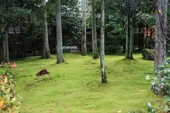 Moss Garden - Japan