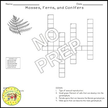 Mosses Ferns Conifers Biology Science Crossword Coloring Worksheet Middle School
