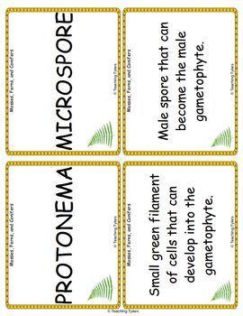 Mosses Ferns Conifers Vocabulary Cards