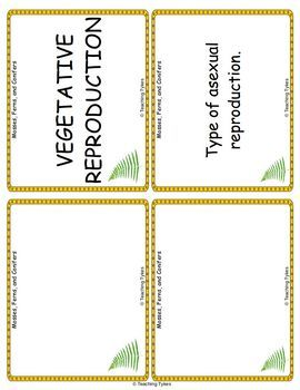 Mosses Ferns Conifers Vocabulary Cards
