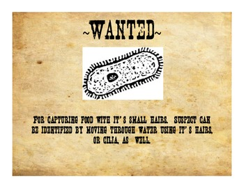 Most Wanted: Protists