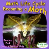 Moth Life Cycle - Becoming a Moth