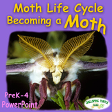 Moth Life Cycle PowerPoint