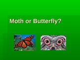 Moth or Butterfly?