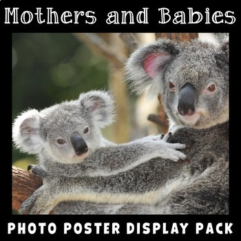Mothers and Babies Photo Poster Display Pack