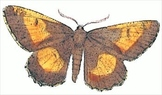 Moths and Camouflage Activity