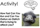 Motion and Velocity - Are you faster than an ostrich?  Lesson Plan