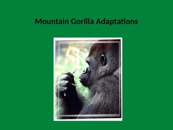 Mountain Gorilla Adaptations Power Point