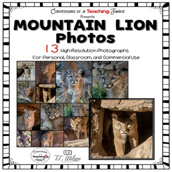 Mountain Lion Photographs for Classroom and Commercial Use