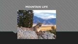 Mountain Presentation