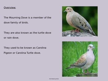Mourning Dove - Power Point - Facts Information Pictures