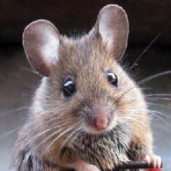 Mouse Critique