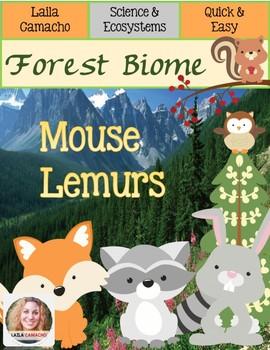 Forest Animals Mouse Lemurs