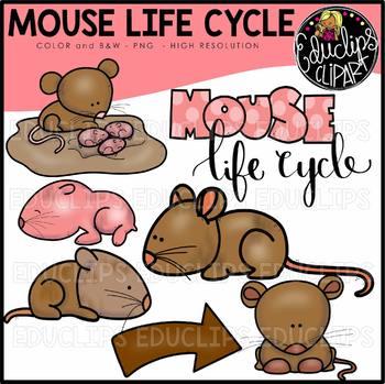 Mouse Life Cycle Clip Art Set {Educlips Clipart}