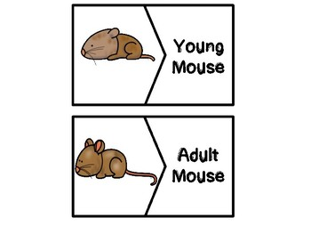 Mouse Life Cycle Puzzles