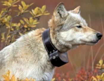 Movie Trailer for Wolf Stalker by Gloria Skurzynski and Alane Ferguson