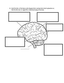 Mr. Body Merge Cube Worksheet