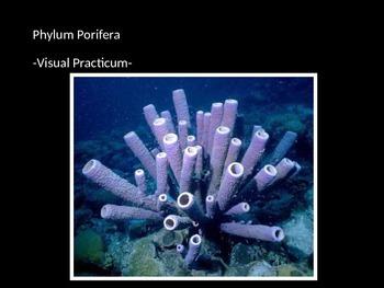 Multicellularity & Phylum Porifera Practicum Test