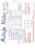 Multiple Allele Anchor Chart