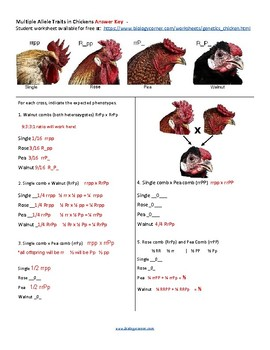 Multiple Allele Traits in Chickens (KEY)