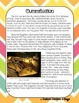 Mummification Socratic Seminar Lesson Plan