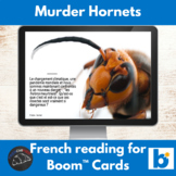 Murder Hornets - reading in French - Boom Cards™ version