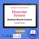 Muscle Actions Muscular System Digital Resource: On GOOGLE