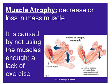 Muscle Atrophy vs. Hypertrophy