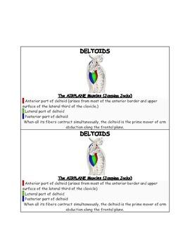 PE Muscle Cards