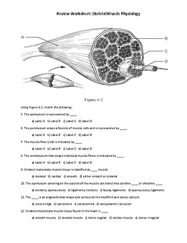 Muscle Cell Anatomy & Physiology: A Review Quiz (Worksheet ...
