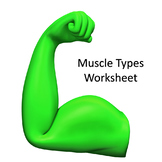 Muscle Cell Types Definitions
