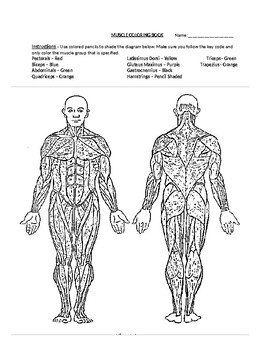 Muscle Coloring Book Activity