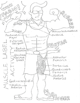 Muscle Diagram Poster (starring Fabio)