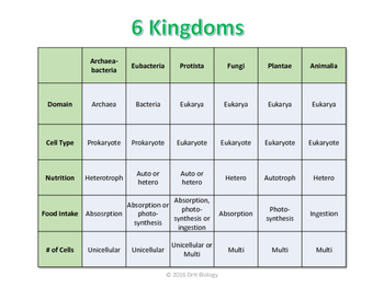 6 Kingdoms Chart by DrH Biology | Teachers Pay Teachers